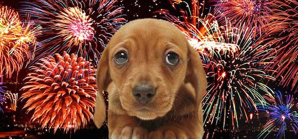 Capodanno: i rischi per i nostri pet! immagine