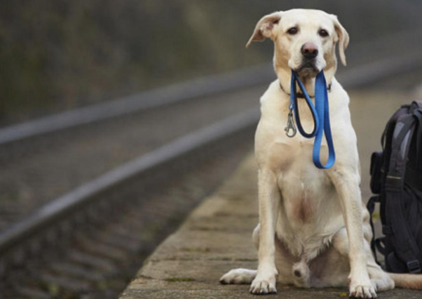 L' adozione di un cane abbandonato immagine