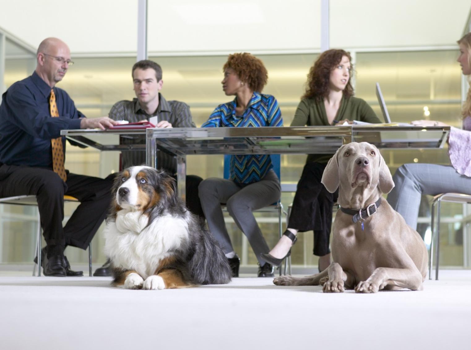 Il cane in ufficio immagine